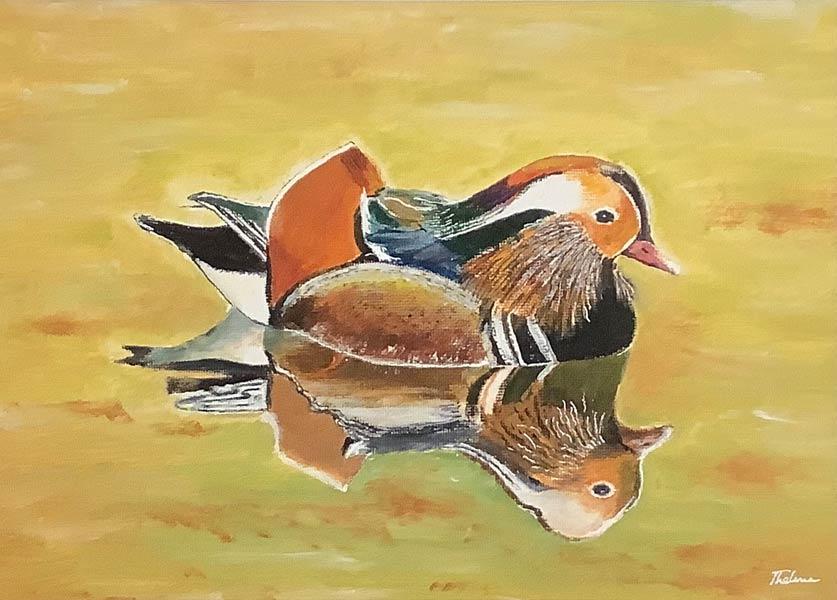 P042 Mandarin Duck